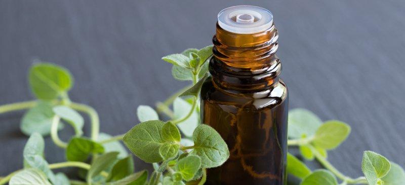 Oregano Oil Benefits Superior to Prescription Antibiotics?