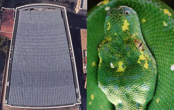 Pope-Snake