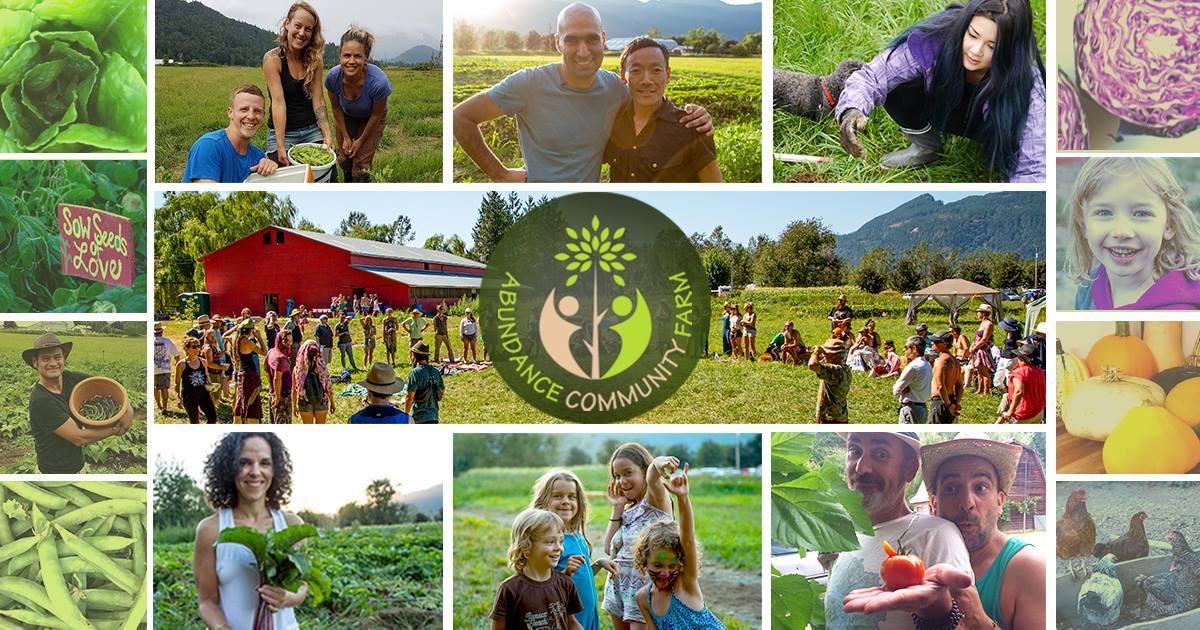 Abundance Community Farm: A New Agriculture Model That Bridges The City And The Farm