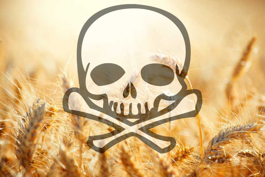 A New Reason Why Wheat and GMOs Can Destroy Your Health