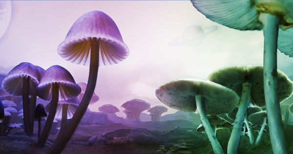 Psilocybin and Magic Mushrooms: Next Health & Legalization Trend After Cannabis?