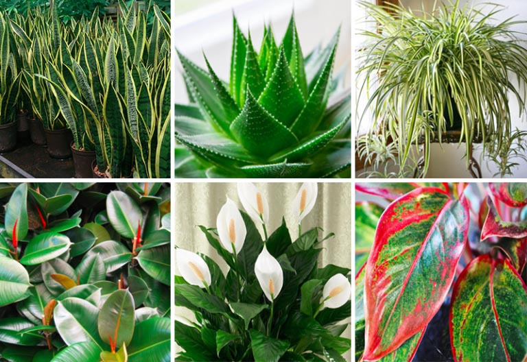 These Plants Are Oxygen Bombs & They Clean The Air In Your Home