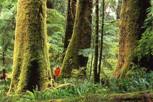 """ Miracle Saves Old Growth Forest"""