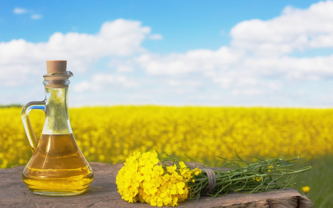 SCIENTISTS FINALLY ISSUE WARNING AGAINST CANOLA OIL: IT DAMAGES YOUR BRAIN, CAN CAUSE DEMENTIA, AND WEIGHT GAIN