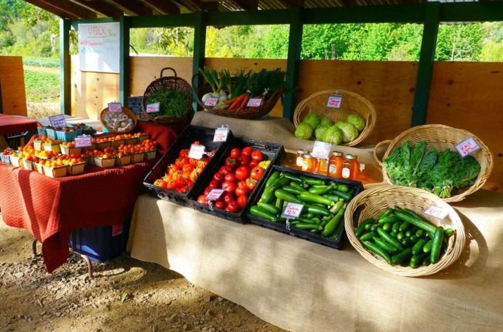 City Shuts Downs Preschoolers' Farm Stand Citing Zoning Violations