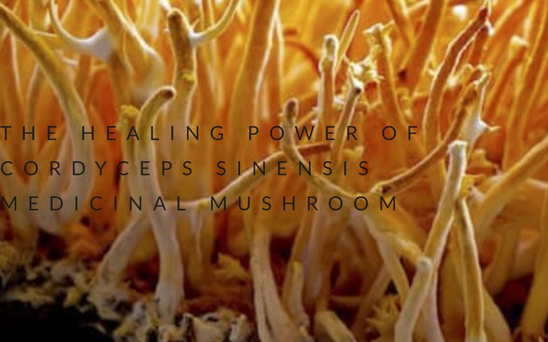 THE HEALING POWER OF CORDYCEPS SINENSIS MEDICINAL MUSHROOM