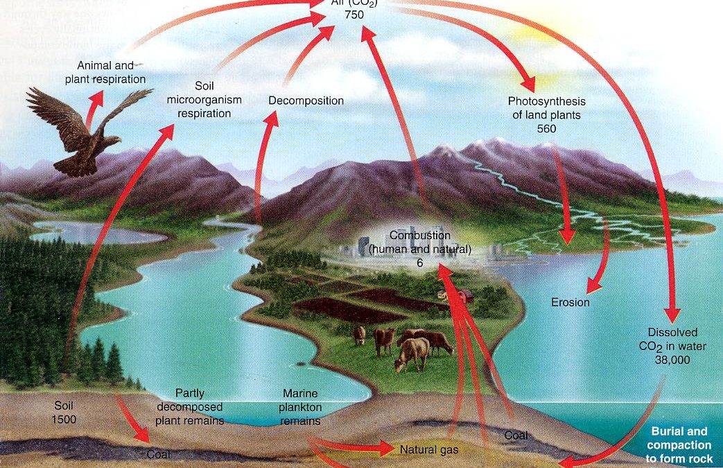 The Carbon Cycle and the Demonization of CO2