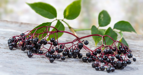 Top Four Antiviral Benefits of Elderberry