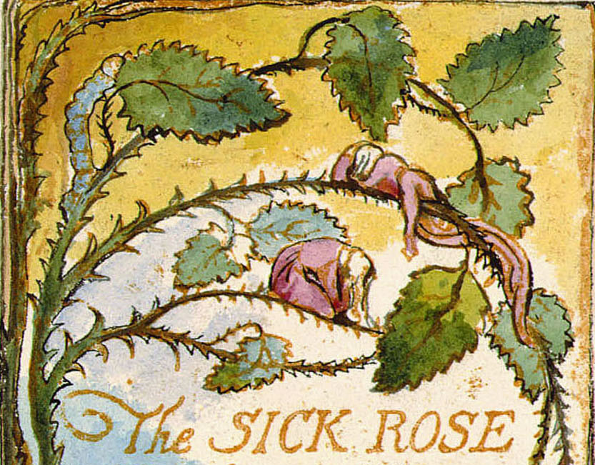 The Sick Rose  By Michael Tsarion