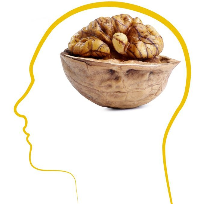 Why Walnut Resembles the Brain It Nourishes