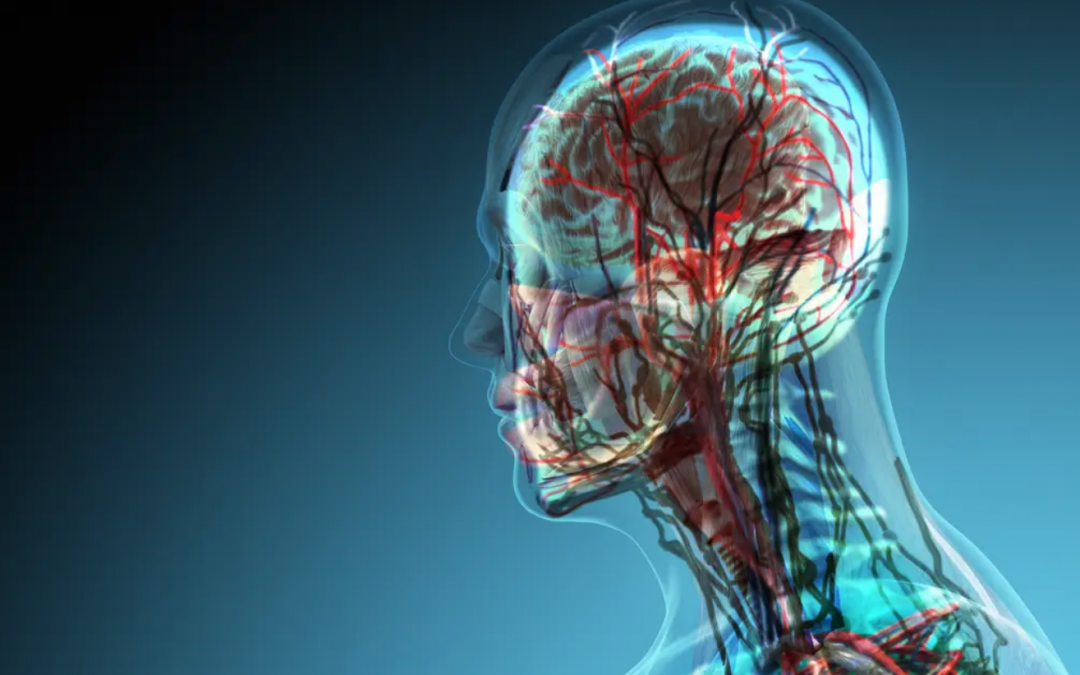 Scientists Discover New Organ In The Center Of The Human Head