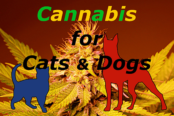 Cannabis for Cats & Dogs