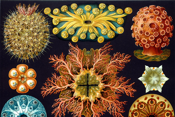 Morphic Resonance & Morphic Fields: Collective Memory & the Habits of Nature